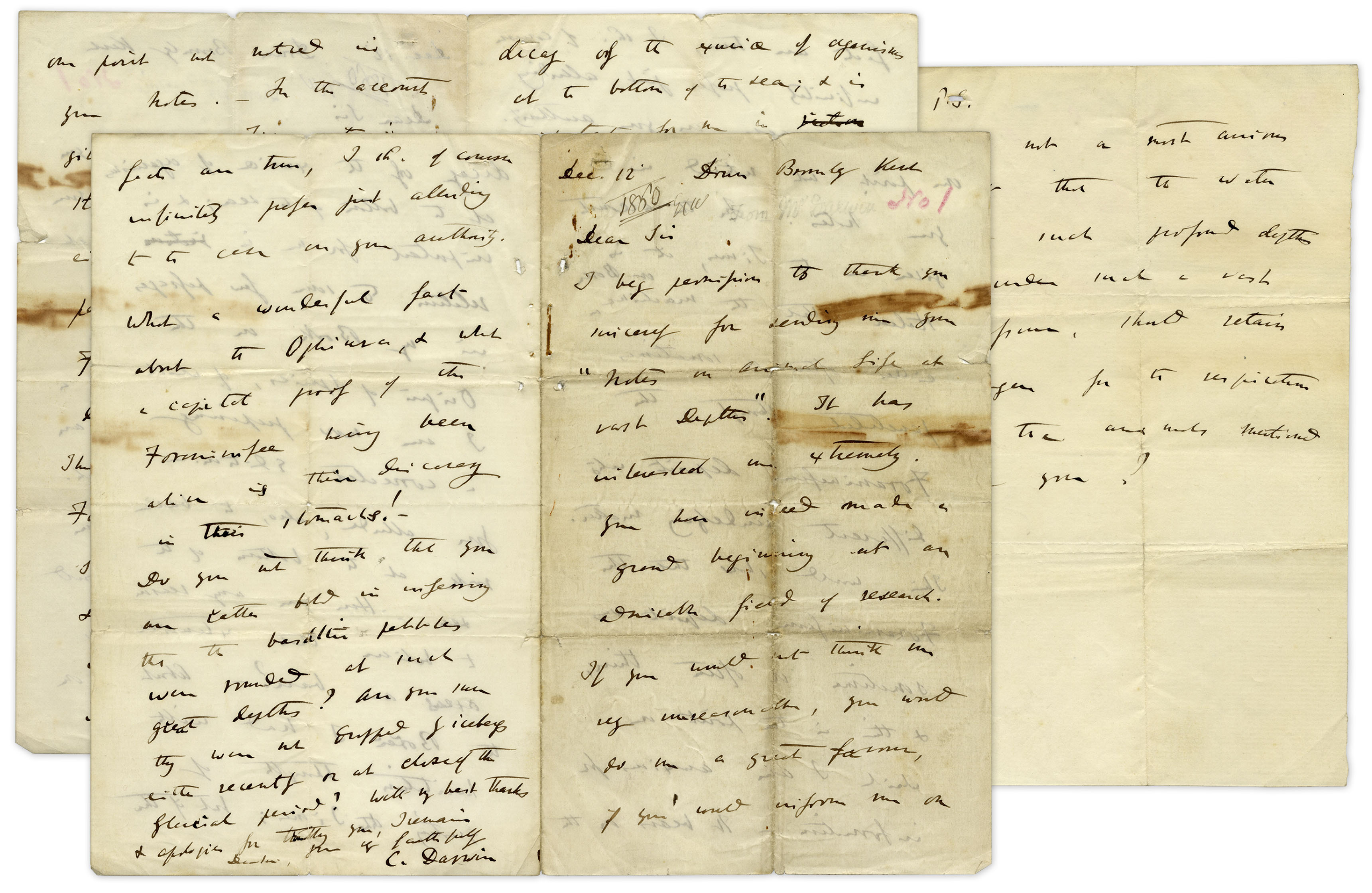 "Charles Darwin Autograph Important Charles Darwin Autograph Letter Signed From 1860 -- Darwin Writes in Detail About His Famous Book: ""…the Origin of Species, of which I am now preparing a corrected edition…"""